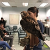 Volunteers for Wildlife showing studetns a Red Tail Hawk