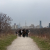 U of T staff and students on a nature walk with the CN Tower in the background