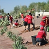 Volunteers from a Variety of Groups Team Up to Plant Trees at Tempe Town Lake
